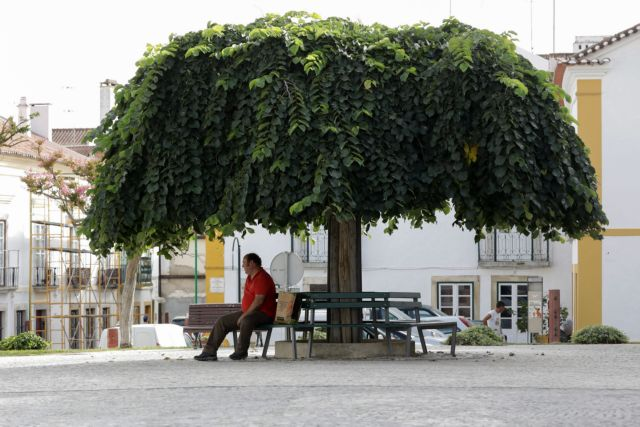 Epa06924134 A Man Sits In A Shade Of A Tree During The Heat Wave In Coruche, Santarem, Center Of Portugal, 02 August 2018. The Portuguese Institute Of The Sea And Atmosphere (IPMA), Warns That The Maximum Temperatures Will Be 'well Above The Normal Values For The Time, Close To 40 Degrees Celsius As A Spell Of Heat Weather Is Going Through Europe.  EPA/ANTONIO COTRIM